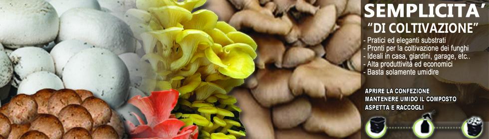 Ready mushroom kit