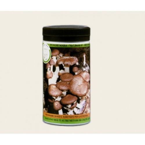 Barattolo micelio secco Funghi Strofaria 100g