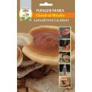 Chiodi di Micelio funghi Ganoderma Lucidum Reishi