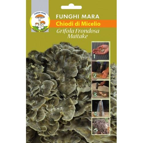 Chiodi di Micelio funghi Grifola Frondosa Maitake