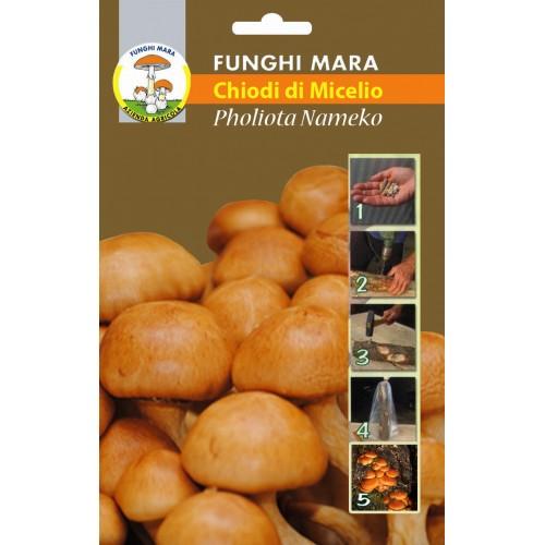 Chiodi di Micelio funghi Pholiota Nameko