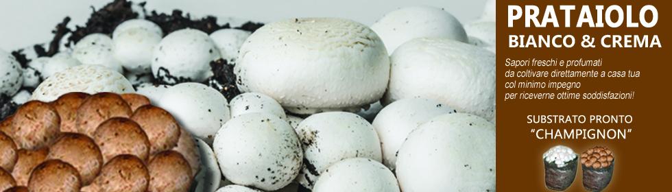 Pronto funghi prataiolo