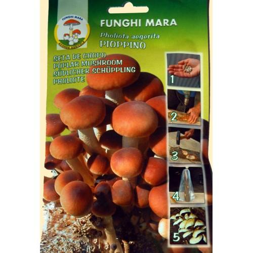 Chiodi di Micelio funghi Pioppino