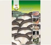 Chiodi micelio di funghi Pleurotus ostreatus