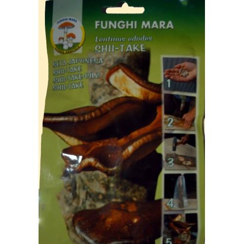 Chiodi di Micelio funghi Shiitake