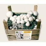 Substrato pronto funghi Prataiolo bianco in cassetta di legno