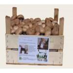 Substrato pronto funghi Prataiolo crema in cassetta di legno
