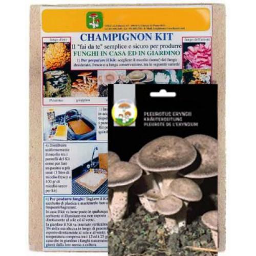 Kit pronta semina funghi Cardoncelli eryngii