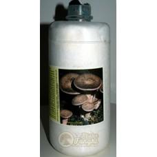 Micelio fresco di funghi Cardoncello eryngii bottiglia 2,5LT
