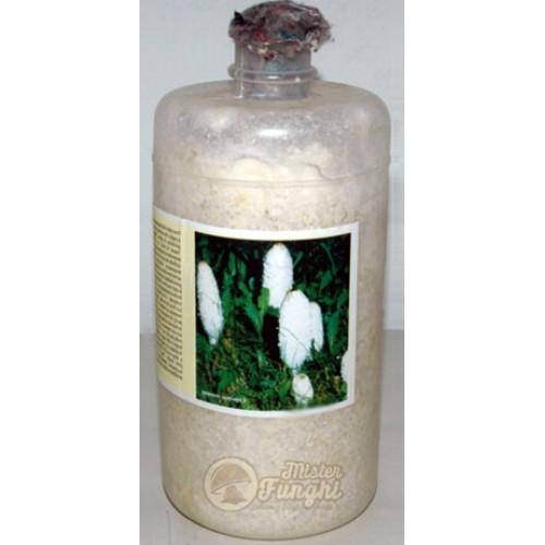 Micelio fresco di fungo Coprinus comatus bottiglia 2,5LT