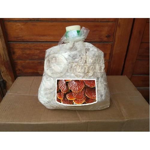 Micelio Fresco funghi Ganoderma Lucidum in sacchetto 4 Litri