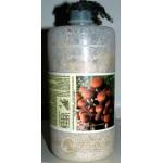 Micelio fresco di funghi Pioppino bottiglia 2,5LT