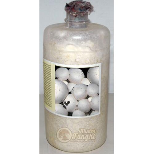 Micelio fresco di funghi Prataiolo bianco bottiglia 2,5LT