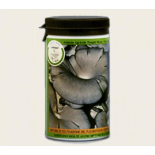 Barattolo micelio secco Pleurotus ostreatus 100g