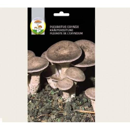 Micelio secco di funghi Cardoncello