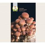 Micelio secco di funghi Pioppino