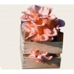 Substrato pronto funghi Pleurotus amore in cassetta di legno
