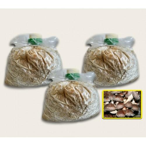 Substrato composto incubato di funghi Shiitake 3 Pz.