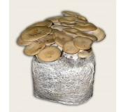 Substrato sacco composto incubato di funghi Cardocello eryngii