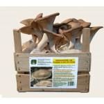 Substrato pronto funghi Cardoncello in cassetta di legno