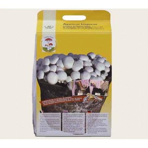 Substrato supersacco composto incubato di funghi Prataiolo bianco Champignon